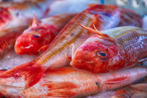 Fish, Mullet, Red, Culinary, Kitchen, Meals, Cod