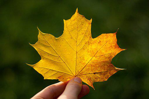 Leaf, Hand, Keep, Autumn, Golden Autumn, Leaves