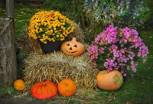 Thanksgiving, Pumpkins, Halloween, Straw, Autumn