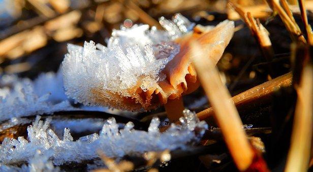 Mushroom, Winter, Nature, Ice, Ice Crystals