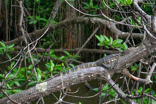 Lizard, Sri Lanka, Nature, Animals, Wild, Reptile
