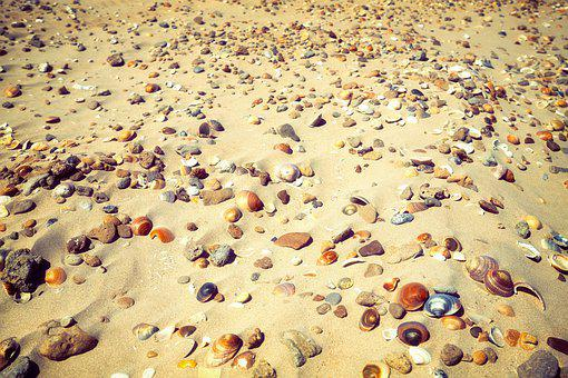 Beach, Shells, Sand, Holiday, Summer, Shell, Sea