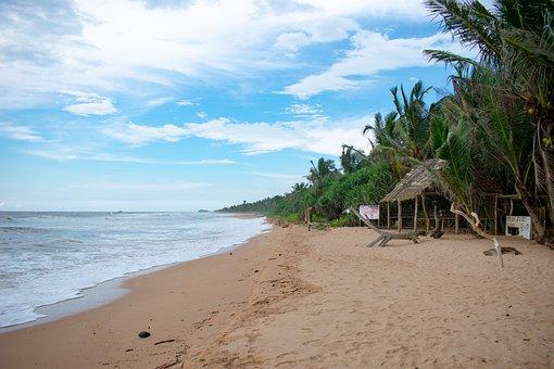 Sri Lanka, Exotic, Nature, Travel, Tropical, White