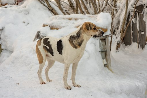 Dog, Winter, Day, Snow, Milk, Tricolor, Tenderness