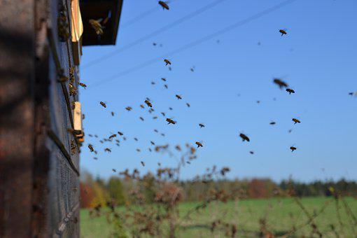 Bees, Honey Bees, Insect, Beehive, Approach, Flying