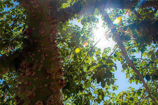 Tree, Sunlight, Sharp, Rays, Path, Green, Atmosphere
