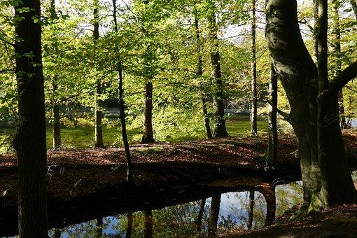 Autumn, Autumn Leaf, Autumn Leaves, Fall Colors