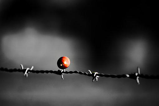 Barbed Wire, Wire, Acorn, Impaled