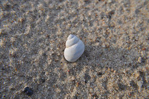 Seashell, Beach, Water, Shells, Holidays, Sand, Sea