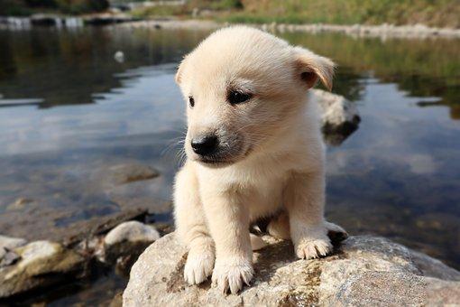 Puppy, Dog, Animal, Cute, White, Little, Dang Stuck
