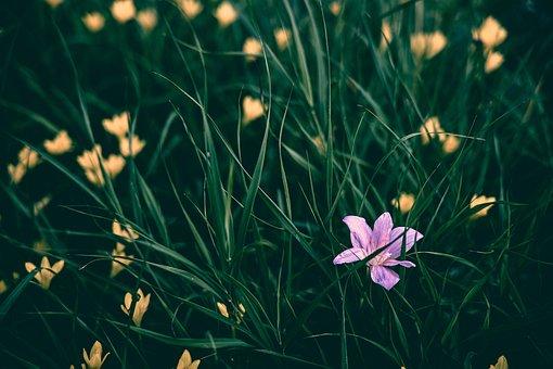 Flowers, Pink, Natural, Spring, Plant, Floral Design