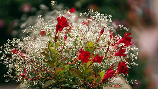 Flowers, Red, Blossom, Bloom, Nature, Plant, Garden