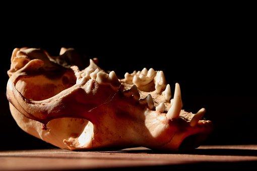 Bone, Halloween, Skeleton, Skull, Death, Horror, Scary