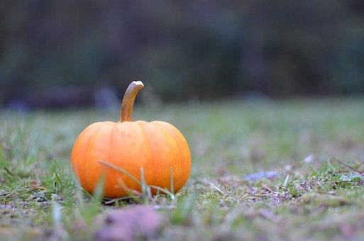 Fall, Pumpkin, Halloween, Nature, Pumkins, October
