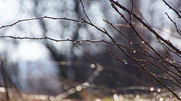 Aesthetic, Branches, Sun, Drip, Spring, Melt, Dewdrop