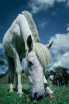 White Horse, Tender, Loving, Animals, Friend, Portrait