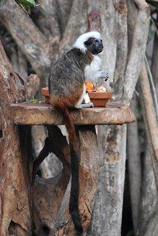 Monkey, Fun, Cute, Primate, Nature, Fur, Zoo
