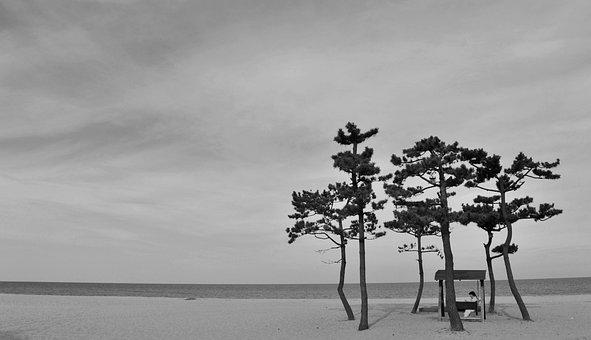 Beach, Black And White, Pine, Solitude, Landscape