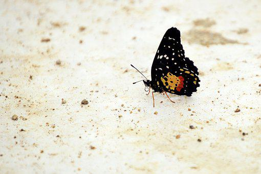 Floor, Soil, Black, Entomology, Natural, Butterfly