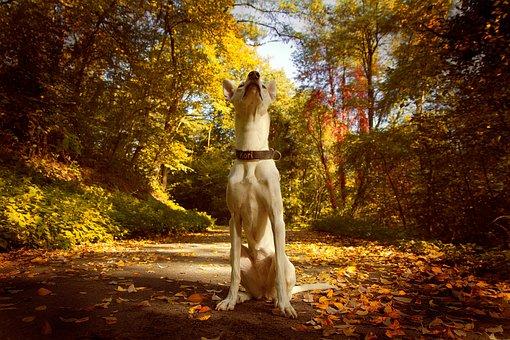 Dog, Forest, Nature, Animal, Pet, Trees, Landscape