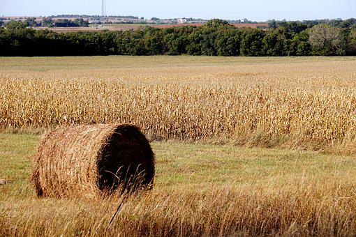 Hay, Kansas, Rural, Agriculture, Field, Countryside
