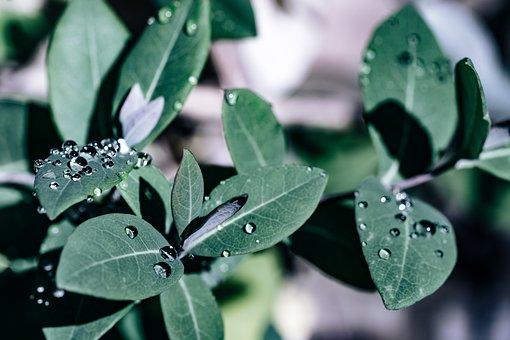 Drop, Water, Leaf, Drip, Wet, Nature, Rain, Splash