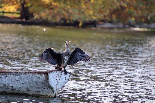 Cormorant, Birds, Seabirds, Lake, Boat, Pen, Plumage