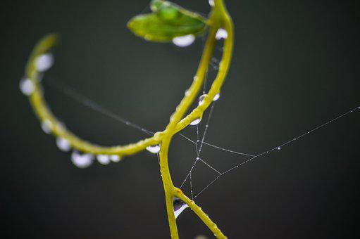 Vine, Water, Dew Dewdrops, Nature, Green, Vineyard