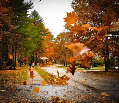 Fall, Autumn, Colors, Leaves, Nature, Forest, Tree