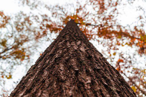 Autumn, Forest Path, Leaves, Fall Color, Fall Foliage