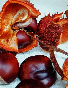 Chestnut, Autumn, Nature, Brown, Buckeye, Autumn Fruit