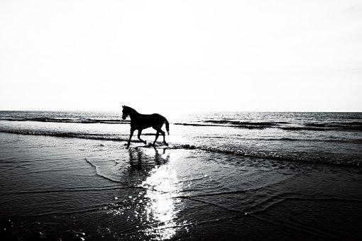 Horse, Silhouette, Landscape, Sunset, Animal, Nature