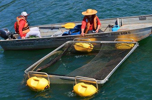 Rio, Agua, Boat, Wet, Fishing