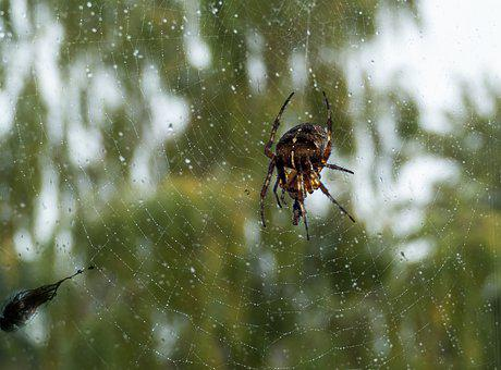 Spider, Web, Close Up, Dewdrop, Insect, Arachnophobia
