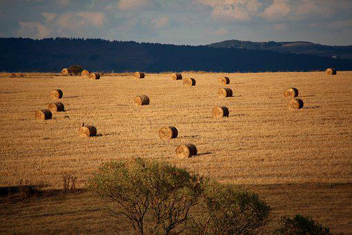 Autumn, Field, In The Fall, Nature, Landscape, Colorful