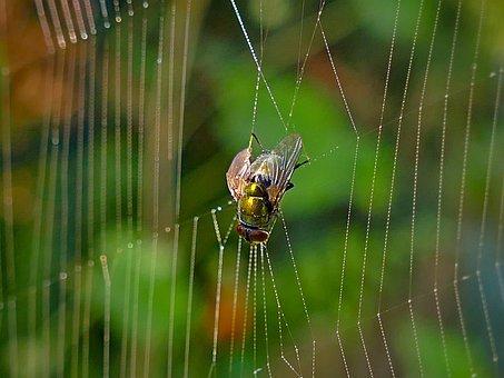 Mucha, Insect, Cobweb, Hotel, Hanging