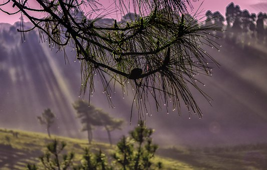 Morning, Dewdrops, Dewdrop, Nature, Drop, Green