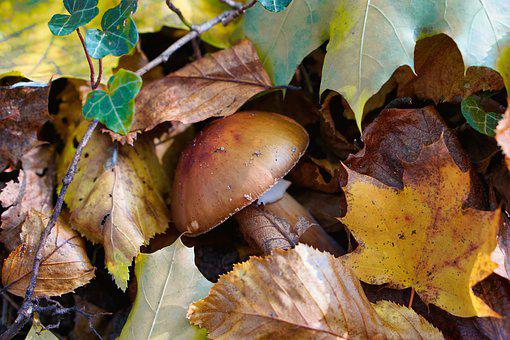 Mushroom, Leaves, Autumn, Dirty, Nature, Forest