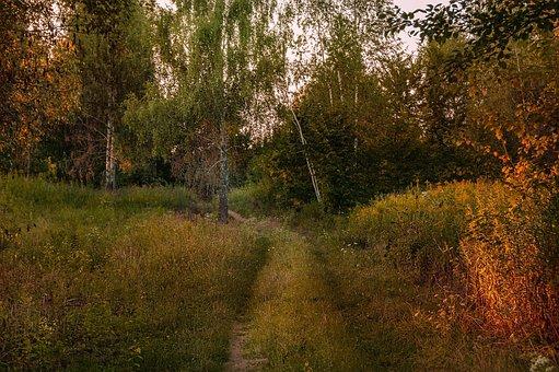 Tree, Grass, Landscape, Nature, Birch, Way, Plant, Leaf