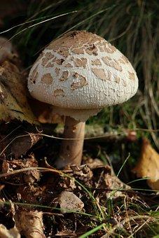 Kite, Mushroom, Autumn
