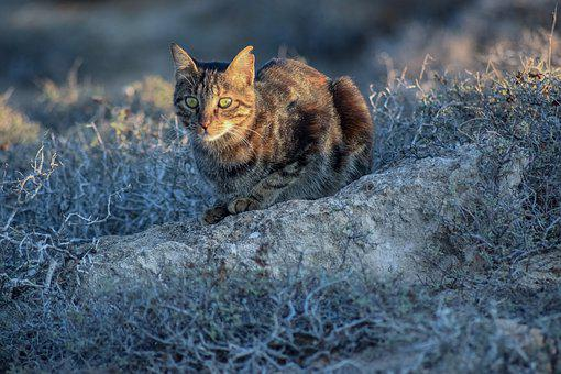 Cat, Stray, Animal, Cute, Homeless, Nature, Outdoors