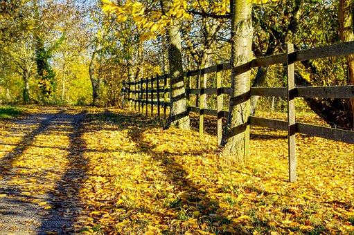 Leaves, Autumn, Mood, Autumn Colours, Colorful, Yellow