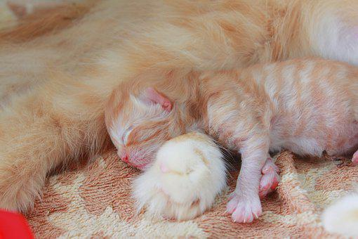 Cat, Baby, Kitten, Cute, Pet, Animal, Sweet, Small, Fur