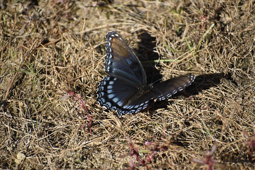 Butterfly, Ground, Beautiful, Summer, Nature, Insect