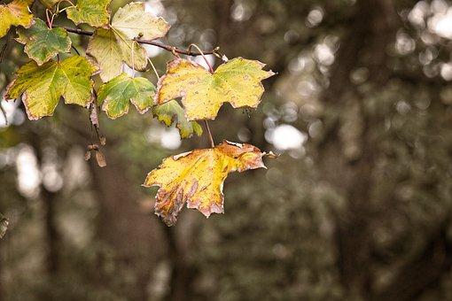 Sheet, Autumn, Leaves, Nature, Season