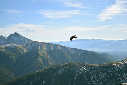 Mountains, Soul, Travel, Birdview, Birds, Nature, Dawn