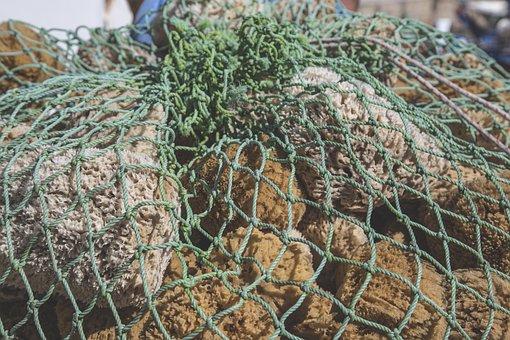 Sea Sponge, Sponge, Sea, Water, Ocean, Animal, Reef