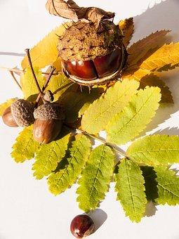Autumn, Chestnut, Still Life, Leaves