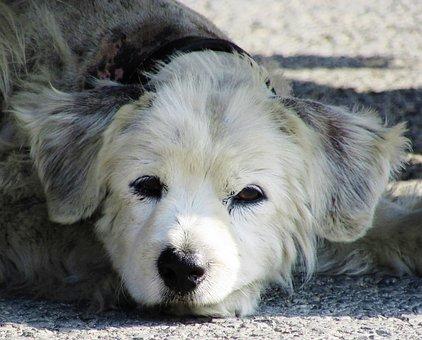 Dog, Stray, Sad, Homeless, Lonely, Abandoned, Sadness