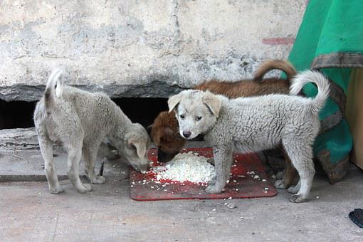 The Tramp, Puppy, Pathetic, Street, Eat Rice, Sadly